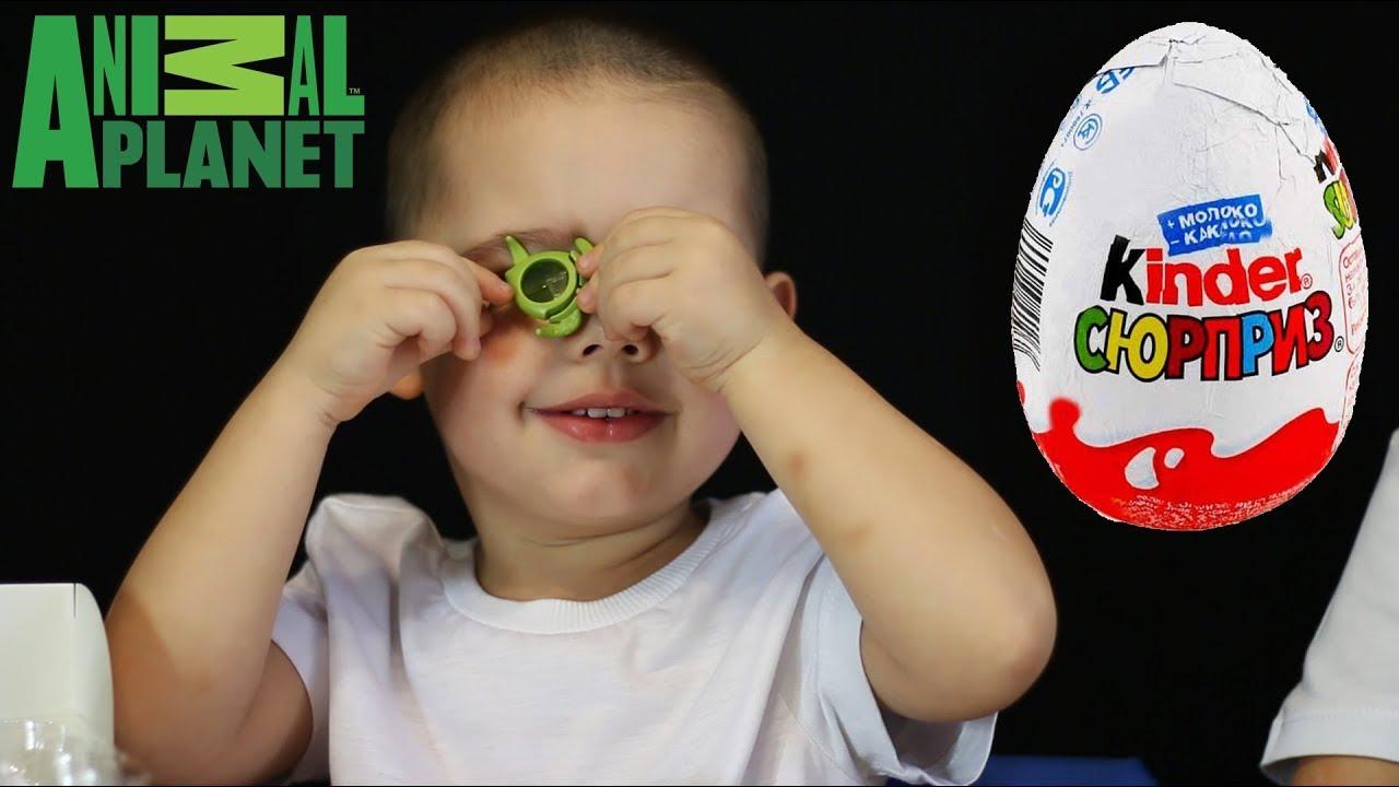 Дети распаковывают Киндер Сюрпризы - Планета Животных. Animal Planet Kinder Surprise toys