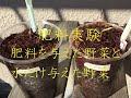 水耕栽培 肥料実験 の動画、YouTube動画。