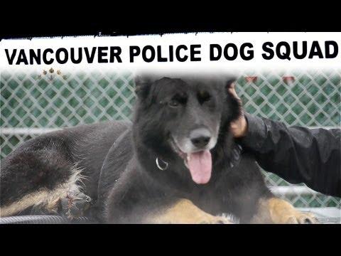 TulipTV - Police Dogs