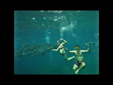 Philippines 2016 Holiday movie (10 days in August)