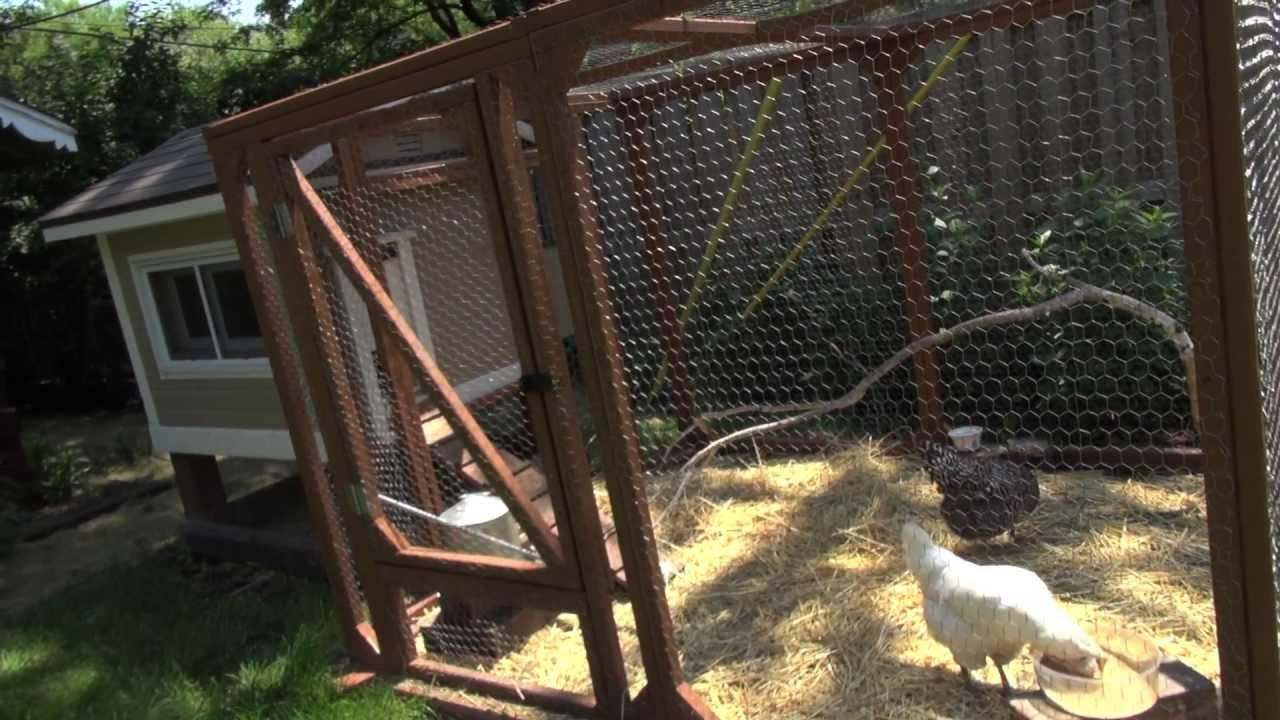 raising backyard chickens youtube
