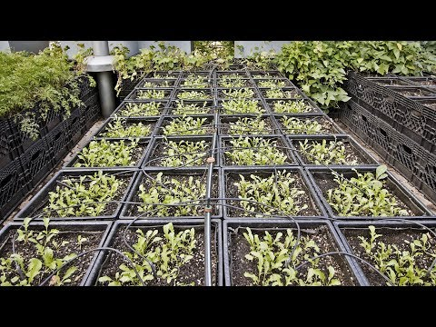 Farming in 3,200 Milk Crates For a High-End Restaurant in Manhattan