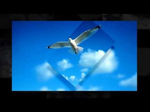 красивые картинки.wmv