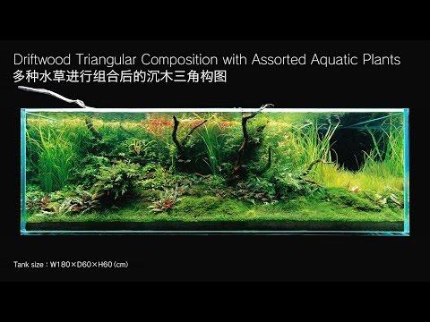 [ADAview] 180cm Aquarium Layout: Driftwood Triangular Composition(EN/CN Subs)