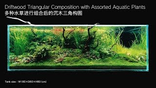 [adaview] 180cm Aquarium Layout: Driftwood Triangular Composition(en/cn Subs)