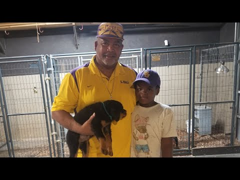 Herman Joseph picks up his huge rottweiler pup