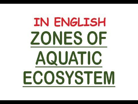 Aquatic Ecosystem Zones - Photic/Aphotic, Limnetic, Pelagic, Intertidal, Neritic (In Eng)