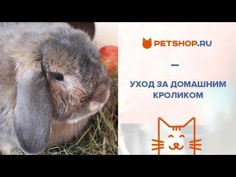 Вопрос: Как ухаживать за домашним кроликом?