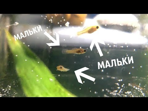 НАШЕЛ МАЛЬКОВ МОЛЛИНЕЗИИ В ФИЛЬТРЕ | СНОВА МАЛЬКИ