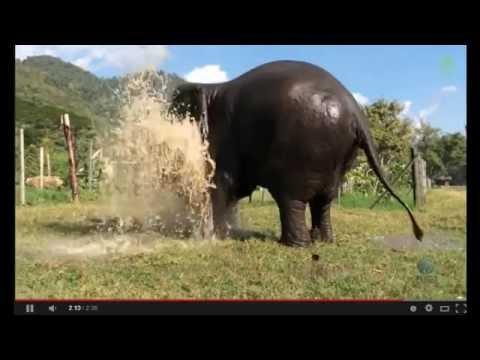 Слоны - плохие сантехники или как правильно смотреть видео со слонами