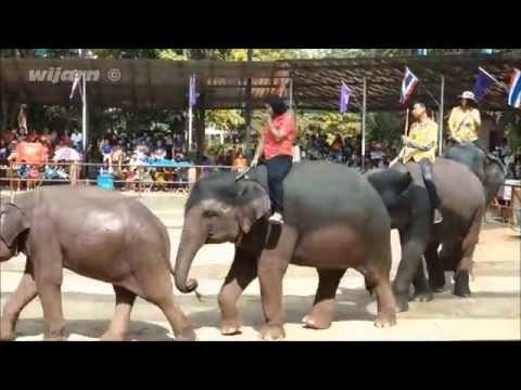 การแสดงช้างสุรินทร์ (Surin Elephant Show, Thailand)