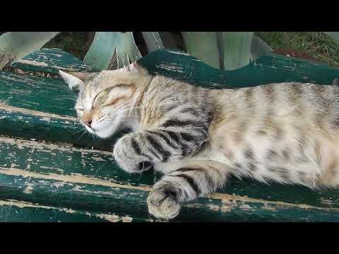 Вы когда нибудь видели, чтобы кошки так спали? Вас это удивит!  Аnimals,Tiere