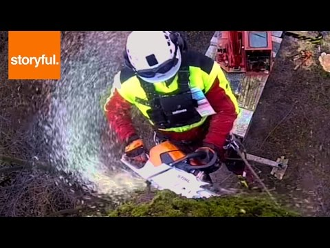 Extreme Life Of A Tree Surgeon