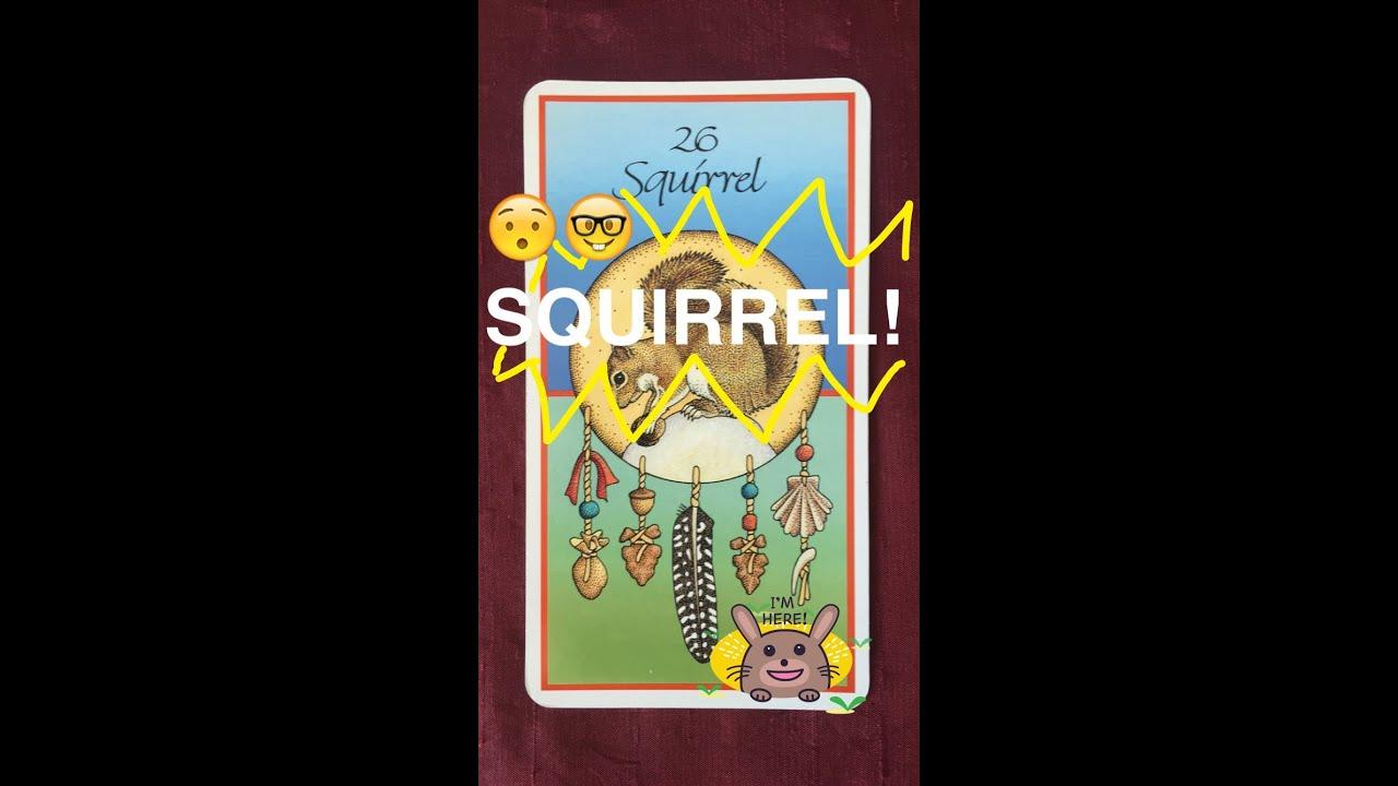daily deity squirrel animal