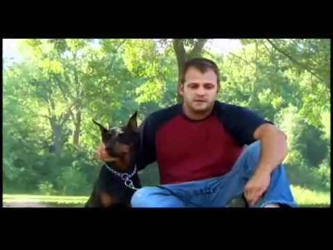 Dogs 101 - Doberman Pinscher