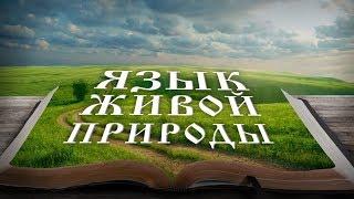 Язык живой природы. Андрей Кинсбурский
