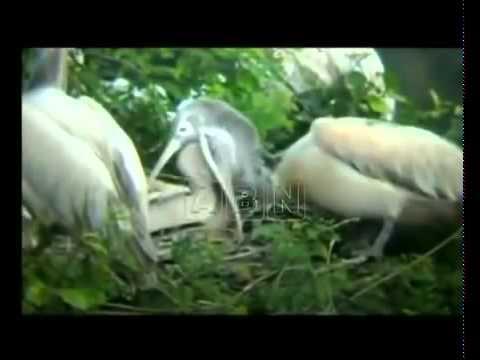 Nelapattu Bird Sanctuary - Nellore