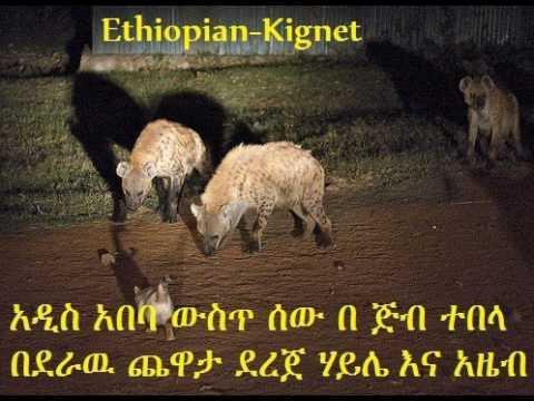 አዲስ አበባ ውስጥ ሰው በ ጅብ ተበላ - Hyena in Addis Aba beat peoples