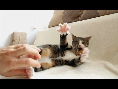 How To Tickle a Cat