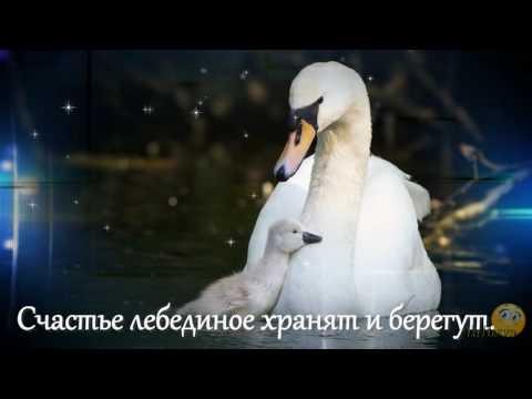 Белые лебеди на прудуиз YouTube · С высокой четкостью · Длительность: 22 с  · Просмотров: 49 · отправлено: 2-4-2015 · кем отправлено: Глеб Баблуани