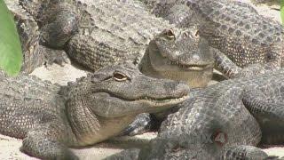 SEGMENT FOUR Everglades Wonder Gardens