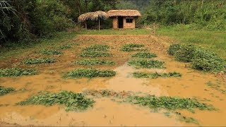 Primitive technology: Farmland, Fertilizer (How to make organic fertilizer) Part 3