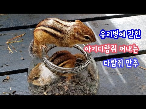 [ENG]      : The Chipmunk helping the baby chipmunk Bami out of the glass jar.