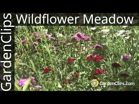 Gardening w Wildflowers  How to plant and maintain a wildflower meadow  North American Wildflowers