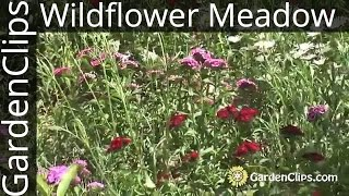 Wildflowers - How to plant and maintain a wildflower meadow - North American Wildflowers