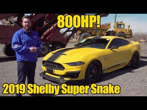 800HP 2019 Shelby Super Snake Mustang! How To Buy! Walkaround Review!