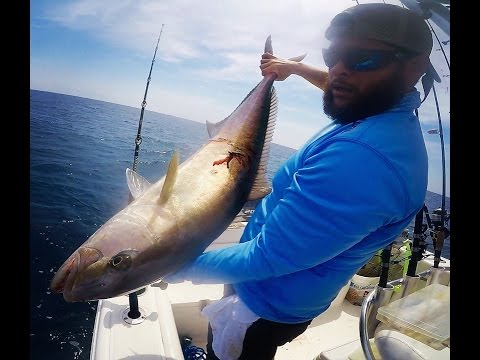 Miami Offshore fishing - Monster Amberjack off a wreck