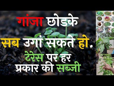 Sandeep chavan Terrace Farming