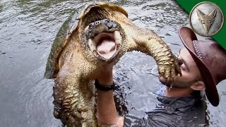 Man Jumps from Dock to Catch GIANT Turtle!