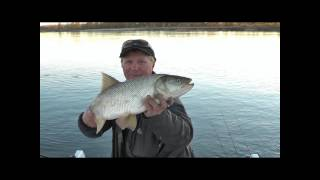Fly fishing on the Volga river Russia