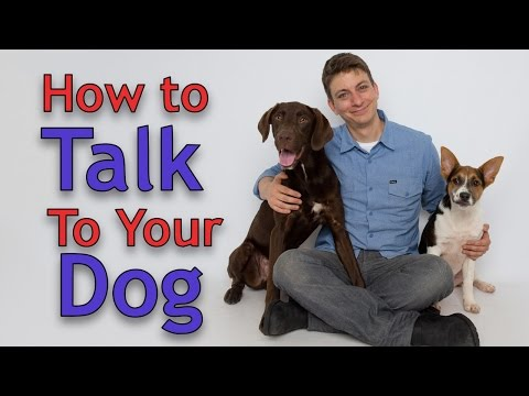 Dog Training: The ART of Communicating with Your Dog