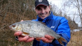 Medalowa płoć na rozpoczęcie sezonu | FishingPlanet #2 - Na żywo