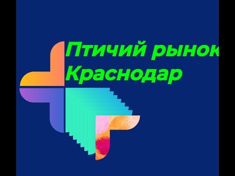 Птичий рынок Краснодар (05.01.2020г.)