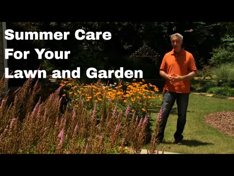 What to do Mid-Summer in your Lawn and Garden