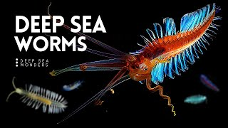 The Wonderful World of Deep Sea Worms