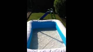 Dogue De Bordeaux In Pool