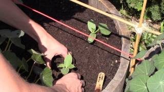 How to grow squash cucumbers and melons