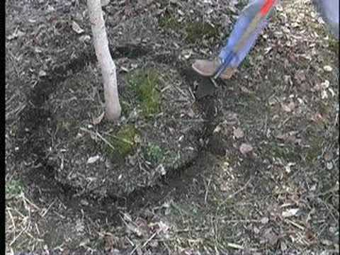Tripple Brook Farm tree digging system (tree spade)