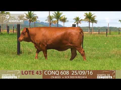 LOTE 43 CONQ 608