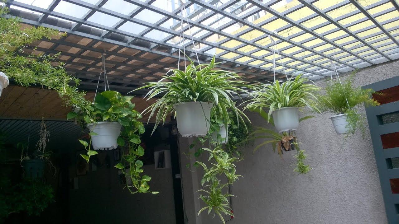 Những loại cây cảnh trang trí quán cà phê đẹp – Motherland Coffee