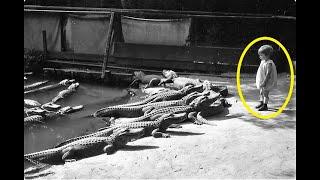 Пятилетняя Нэнси и крокодилы. Что с ней случилось в итоге!