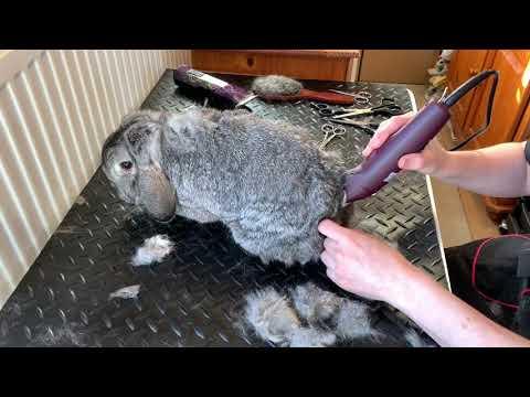PetzCare konijnentrimsalon