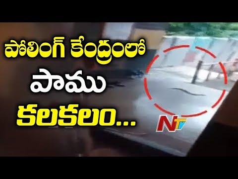 Karnataka Bypoll 2018 : Snake Creates Panic in Ramanagaram Polling Booth | NTV