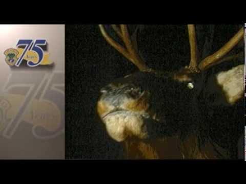 Game Warden: Stuffy The Wonder Elk