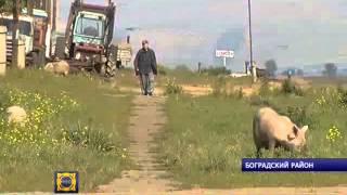 В деревне Борозда Боградского района сельчане получили по 500 рублей за корову(, 2013-09-04T11:53:01.000Z)