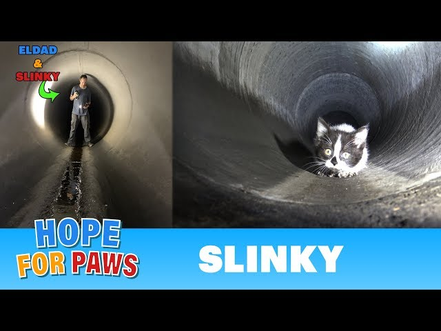 Sewer rescue UNDER the city of Los Angeles! ♥♥♥ You don't want to miss this one!